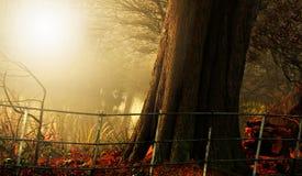 Свет и цвет осени в haampstead Лондоне Стоковое Изображение RF