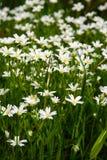 свет иллюстрации пущи цветков предпосылки красивейший морской смычок Стоковые Изображения