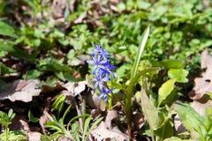свет иллюстрации пущи цветков предпосылки красивейший Стоковое фото RF