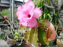 свет иллюстрации пущи цветков предпосылки красивейший Стоковое Фото