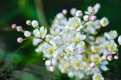 свет иллюстрации пущи цветков предпосылки красивейший Стоковые Фотографии RF