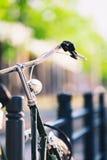 Свет и handlebar винтажного велосипеда города красочный ретро Стоковая Фотография