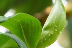 Свет и waterdrops утра на лист Стоковые Изображения