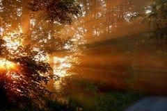 свет красотки Стоковое Изображение