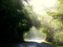 свет к путю Стоковое Изображение RF