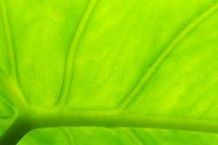 свет листьев Стоковые Изображения