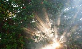 Свет луча на естественной предпосылке Стоковые Фотографии RF
