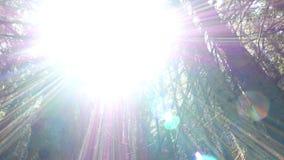 Свет лучей лесных деревьев акции видеоматериалы