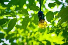 Свет на дереве на предпосылке листвы Электричество сбережений Стоковое фото RF