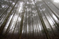 Свет на крае леса Стоковые Фото