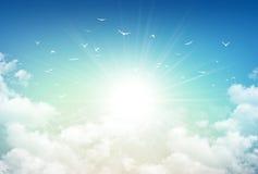 Свет неба утра стоковые фотографии rf