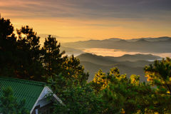 Светлое море леса горы тумана Стоковое фото RF