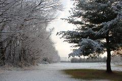 Светлое припудривание снега Стоковая Фотография RF
