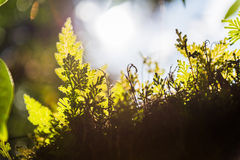 свет оправы лист Стоковые Фотографии RF