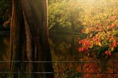 Свет осени золотые и coloursIn Hampstead Лондон Великобритания Англия Стоковое Изображение RF