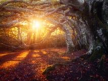 Свет осени Стоковая Фотография RF