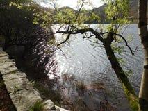Свет отражает в озере Стоковые Изображения