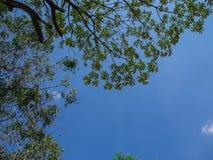 Свет от неба через treetop Стоковая Фотография