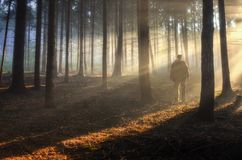 Свет охотника Стоковые Изображения RF