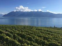 Свет падения, Lavaux, ЮНЕСКО, виноградники Стоковая Фотография RF