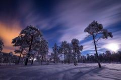 Свет полнолуния над снегом покрыл лес в Heia, зоне Grong, северной Норвегии стоковая фотография