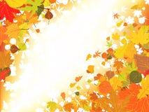 свет предпосылки осени Стоковая Фотография RF