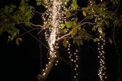 Свет приведенный на дереве в праздниках стоковая фотография