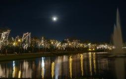 Свет приведенный на дереве в праздниках Стоковые Фотографии RF