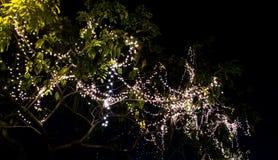 Свет приведенный на дереве на ноче Стоковые Изображения RF
