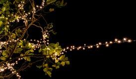 Свет приведенный на дереве на ноче Стоковые Фото