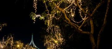 Свет приведенный на дереве на ноче Стоковое Изображение
