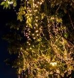 Свет приведенный на дереве на ноче Стоковое фото RF