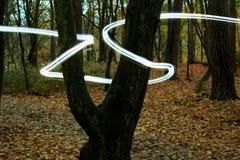 свет пущи луча загадочный Стоковая Фотография