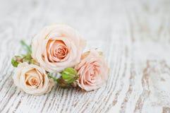 Свет - розовые розы стоковые фотографии rf
