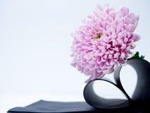 Свет - розовый цветок на белой предпосылке изолированной с путем клиппирования Страница книги сердца closeup большой shaggy цвето Стоковое Изображение RF
