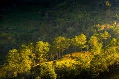 Свет тот блески в дождевом лесе Стоковое Фото