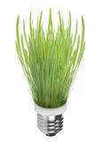 свет травы шарика Стоковая Фотография