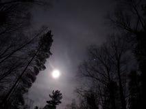 Свет луны стоковая фотография