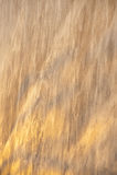 Свет утра на текстурированной стене Стоковые Фото