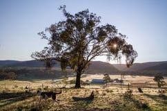 Свет утра с собакой Стоковые Фотографии RF
