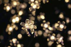 Свет цветка белого рождества Стоковое Фото