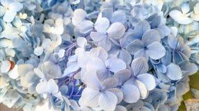 Свет цветка - голубая предпосылка Стоковое Фото