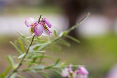свет цветков - пурпур Стоковая Фотография