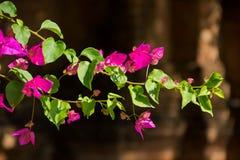 Свет цветков розовый зеленый коричневый Стоковое Изображение RF