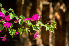 Свет цветков розовый зеленый коричневый Стоковая Фотография