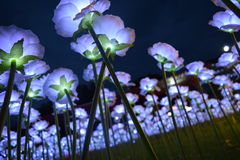 свет цветков Стоковые Фотографии RF