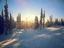 Свет через деревья Стоковые Фотографии RF