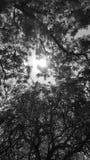 Свет через листья стоковые изображения