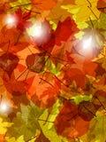 Свет через листья осени Стоковое Изображение RF