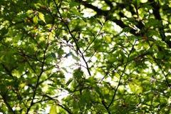 Свет через листья стоковое фото rf